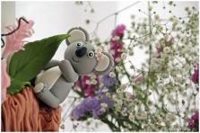 Festa koala